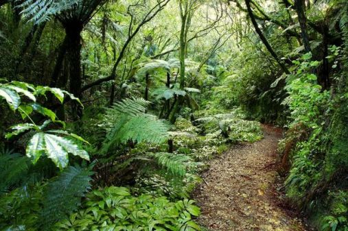 Bush walks - many within easy driving distance