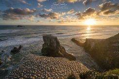 Murawai Gannet Colony Stunning scenery and sunsets - 30 minutes drive