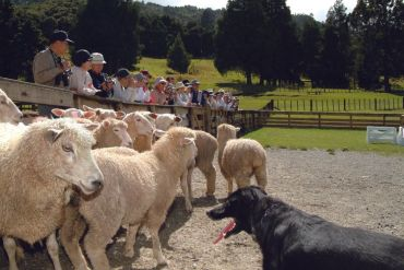 Sheepworld Warkworth - get a taste of NZ agriculture - 40 minutes drive
