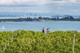 Waiheke island vineyards